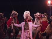 Circus: kamelen