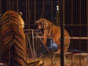 Circus: tijgers