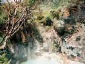 Fumarole at Whakarewarewa, Rotorua, New Zealand