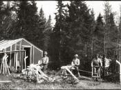 Photograph of Mi'kmaq making hockey sticks from hornbeam trees (Carpinus caroliniana) in Nova Scotia.