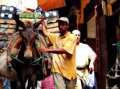 A mule weighed down with goods in the medina (Fes, Morocco). Fuji F11 Camera at ISO 200.