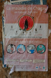 English: Chagas disease, awareness and prevention campaign: poster on a wall in Cayenne, French Guiana, 2008