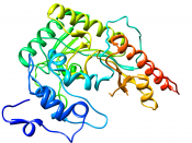 Crystal structure of creatine kinase from human muscle PDB 1I0E
