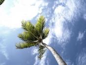 Lynn's palm tree