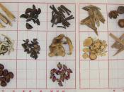 Pictures of herb samples from categories of Chinese Herbs Herbs that Regulate the Qi