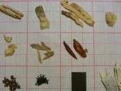 Pictures of herb samples from categories of Chinese Herbs Tonifying Herbs: Herbs that Tonify the Qi