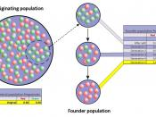 English: Representation of the founder effect: the colored balls represent the two alleles for a specific locus which are present in a hypothetical population; once a random subgroup of a population becomes separated from its ancestral population, the all