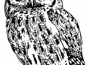 Line art of a screech owl.