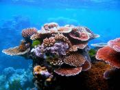 English: A variety of corals form an outcrop on Flynn Reef, part of the Great Barrier Reef near Cairns, Queensland, Australia.