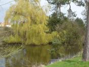 English: A willow tree by the water next to The Valance
