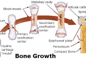 Bone growth source: http://training.seer.cancer.gov/module_anatomy/unit3_3_bone_growth.html