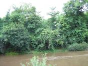 Kumar Dhara River and Forest