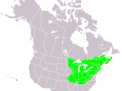 Range map for Acer saccharum in North America