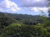 rolling jungle