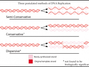 An overview of three postulated types of DNA replication. Original work for Wikipedia by Mike Jones User: Adenosine