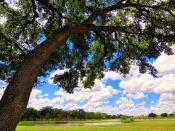 Big Sky Texas