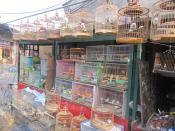 Pet Market Beijing