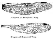 Wings of odonata, dragonflies and damselflies