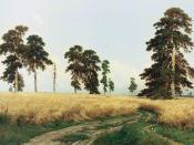 Rye Fields