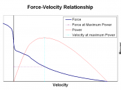 Force–velocity relationship: right of the vertical axis concentric contractions (the muscle is shortening), left of the axis excentric contractions (the muscle is lengthened under load); power developed by the muscle in red.
