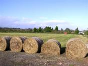 English: Ballinderry Anybody for shredded wheat?