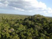 The Maya Biosphere Reserve, showing the El Tigre Complex at El Mirador, Guatemala