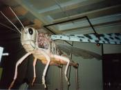 English: When genetic engineering goes bad (2) Migratory locust, an exhibit in a Megabugs exhibition at the Natural History Museum