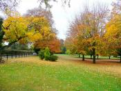 English: Autumn colour at The Leadership Trust Trees in the grounds of the business to the west of Weston under Penyard.