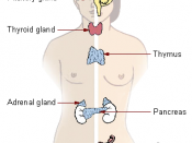 English: Location of major endocrine glands