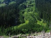 English: Avalanche chute from Pt. 7276 feet with woody debris in foreground