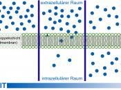 Deutsch: Einfaches Modell der Diffusion an einer Zellmembran. DIe Moleküle diffundieren dem Konzentrationsgefälle nach, bis auf beiden Seiten der Membran die gleiche Konzentration erreicht ist. Français : Modèle simple de diffusion par une membrane cellul