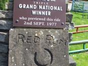 English: Red Rum Would you believe!!!