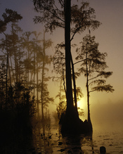 English: Okefenokee National Wildlife Refuge, Georgia