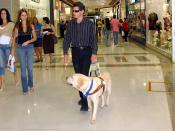 A blind man is led by a guide dog in Brasília, Brazil.