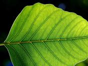 Leaf lamina. The leaf architecture probably arose multiple times in the plant lineage