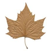 Nederlands: Een bruinig herfstblad.