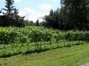 Rattey - Weinbaugebiet Stargarder Land