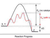 Generic potential energy diagram showing the effect of a catalyst in a hypothetical exothermic chemical reaction X + Y to give Z. The presence of the catalyst opens a different reaction pathway (shown in red) with a lower activation energy. The final resu