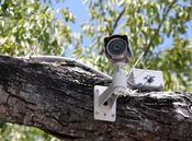 English: A closed-circuit television camera in a tree, Key West, Florida. Français : Une caméra de vidéosurveillance dans un arbre à Key West, en Floride.