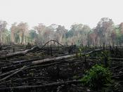 Jungle burned for agriculture in southern Mexico.