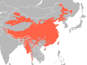 English: Extension of Sino-Tibetan languages, source: Huffman World Language Maps in GMI