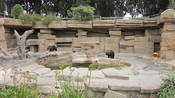 The two Grizzly bears in the Bear Country section of the San Francisco Zoo.