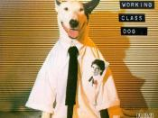 Working Class Dog
