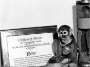 English: Squirrel Monkey Miss Baker poses with the Certificate of Merit for Distinguished Service she was awarded by the American Society for the Prevention of Cruelty to Animals (ASPCA) after her successful return to earth, the associated medal, and the