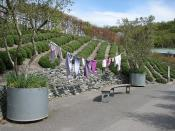 English: Lavender exhibit, Outdoor Biome, Eden Project The Outdoor Biome contains plants which grow in our climate.