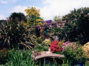 My garden in May 2004