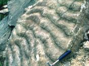 fossile Rippelmarken, Haßberge
