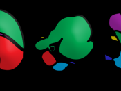 Comparison of stomach glandular regions from several mammalian species. Yellow: esophagus; green: aglandular epithelium; purple: cardiac glands; red: gastric glands; blue: pyloric glands; dark blue: duodenum. Frequency of glands may vary more smoothly bet