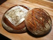 Two naturally-leavened (sourdough) loaves. Front: 90% white flour, 10% rye sourdough loaf proofed in a coiled-cane brotform. Back: A 3-pound whole-wheat miche. Both were leavened using a 100% hydration sourdough starter.