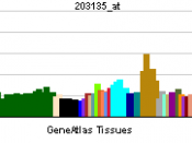 English: Gene expression pattern of the TBP gene.